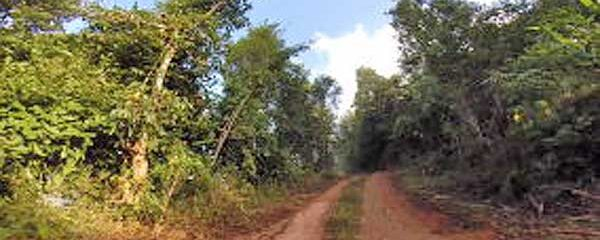 Naked Jungle Run