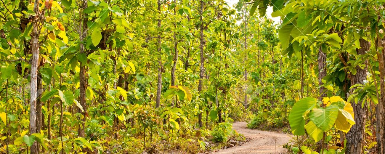 Cancelled: Naked Jungle Run in October